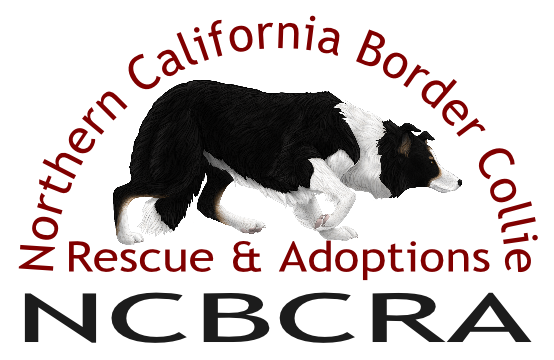 Northern California Border Collie Rescue and Adoption
