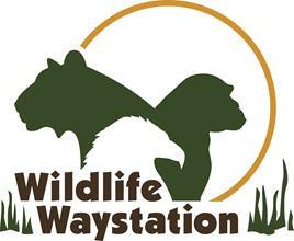 Wildlife Waystation Inc.
